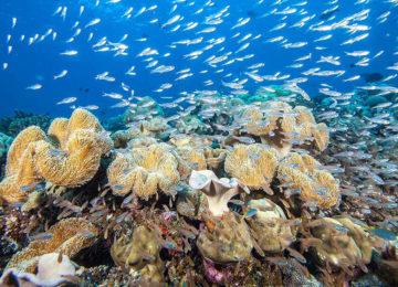 ©Kudadoo_Maldives_Reef