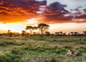 lion-and-sunset-on-a-Tanzania-Safari.jpg
