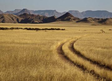 @Wilderness_Safaris_Namibia_Dramaraland_Feld
