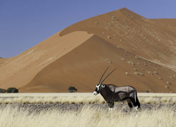 @Wilderness_Safaris_Namibia_Kulala_Adventurer_Camp_Dana_Allen_Tier
