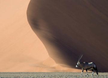 @Wilderness_Safaris_Namibia_Kulala_Desert_Lounge_Dana_Allen_Tier