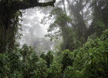 @Wilderness_Safaris_Ruanda_Bisate_Lodge_Dana_Allen_Dschungel (2)