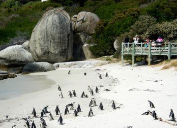 @Wilderness_Safaris_Suedafrika_Pinguine