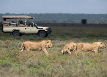 Africa; Tanzania; Sanctuary Kusini Camp; Serengeti Game Drive