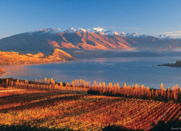 L137-Rippon-Vineyard-Lake-Wanaka-David-Wall