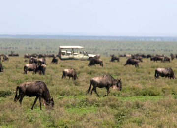 Africa; Tanzania; Sanctuary Kusini Camp; Serengeti Migration