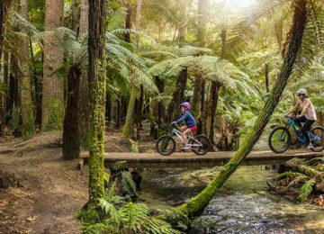 Aktiv unterwegs: Redwoods – Whakarewarewa Wald, Rotorua