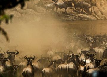Wildlife Great Migration Mara Fluss