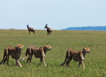 Wildlife Tansania Serengeti