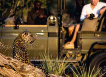 safari_okavango